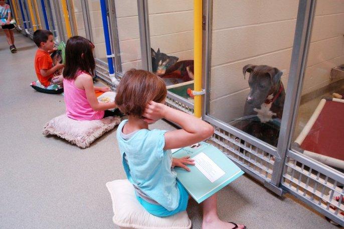 leer-perros